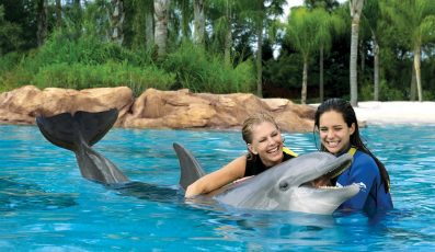 Discovery_Cove_orlando_attractions_american_vacation_living-397x230 - disney